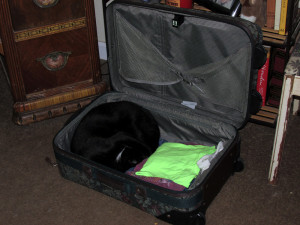 photo of our cat, Oscar in suitcase-1000